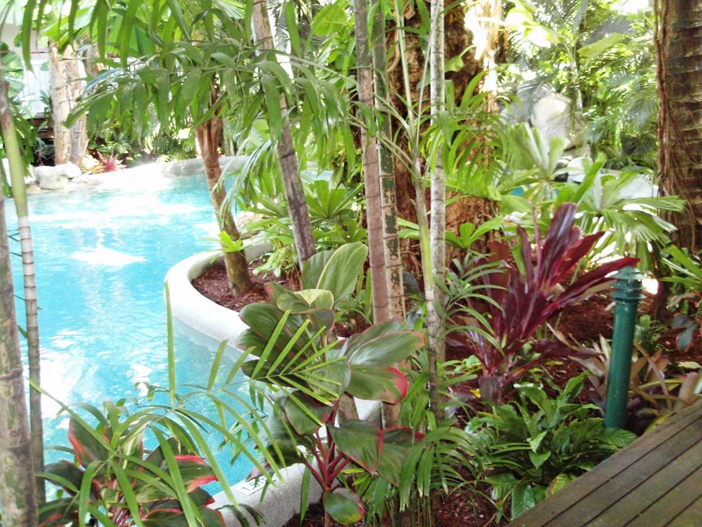 Tropical Palm Gardens Tropical Gardens Palm Cove